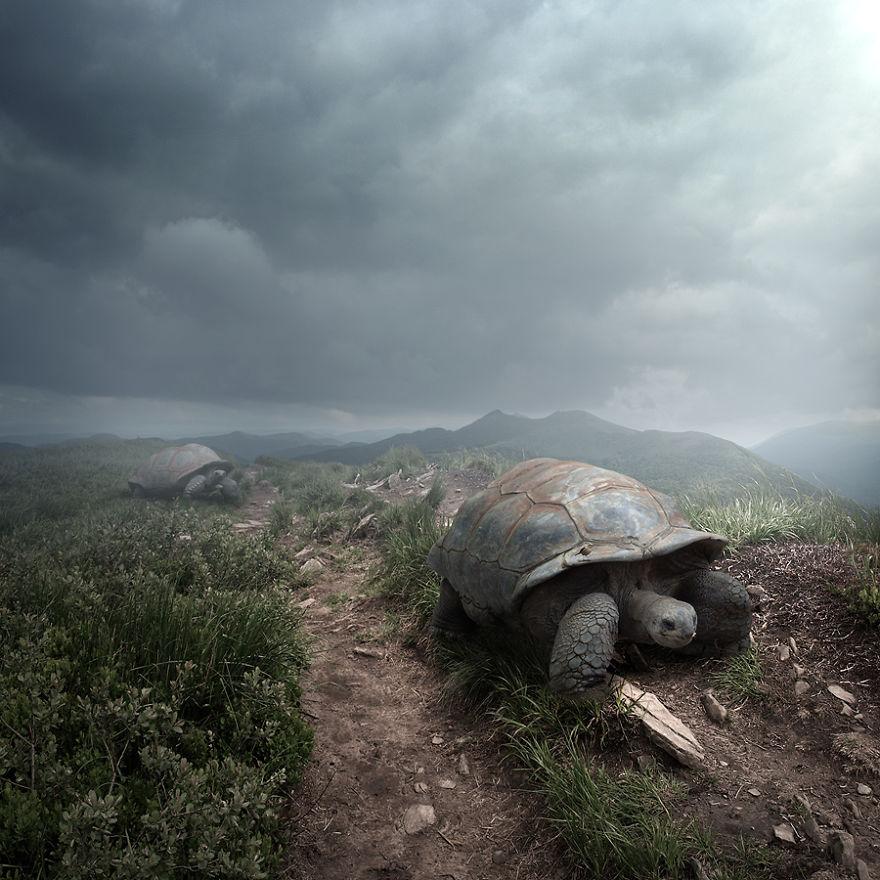 Die unglaublichen Tierfotos von Tomasz Zaczeniuk