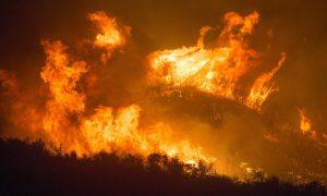 Sting äußert sich zu den verheerenden Waldbränden in Brasilien