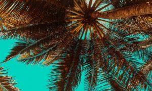 Das Manuskript von John Grisham – Chaos auf Camino Island